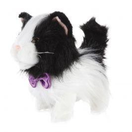 Kočička chodící černobílá