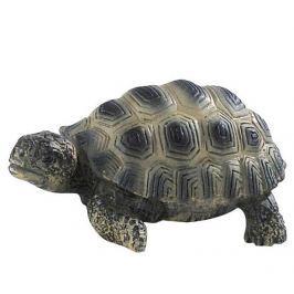 Želva mládě