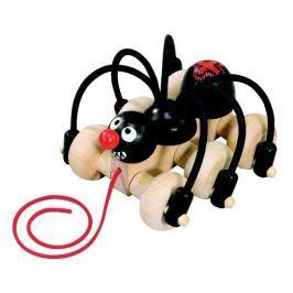 Pavouk černý