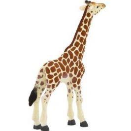 EPline Mládě žirafy stojící
