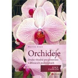 Orchideje: druhy vhodné pro pěstování v domácích podmínkách